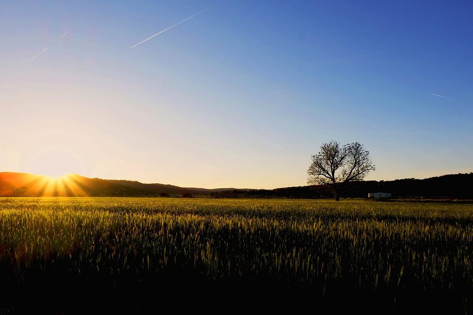 Sunrise, Field, Landscape, Trees, Fog, Backlight