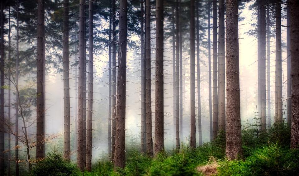 Forest, Landscape, Woods, Trees, Sunrise, Fog, Haze