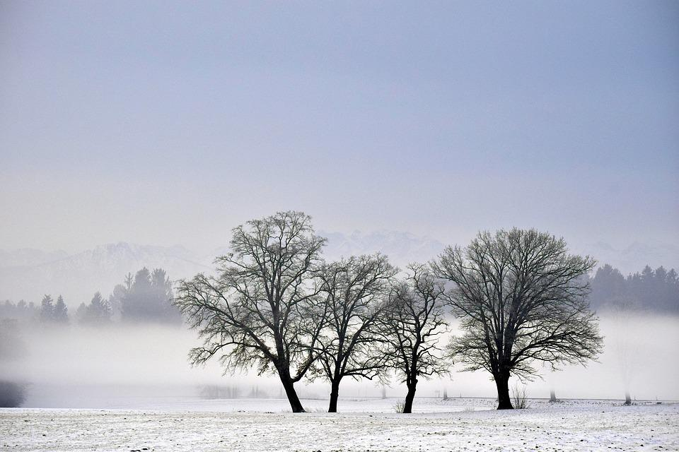 Nature, Tree, Winter, Fog, Landscape, Cold, Snow, Mood
