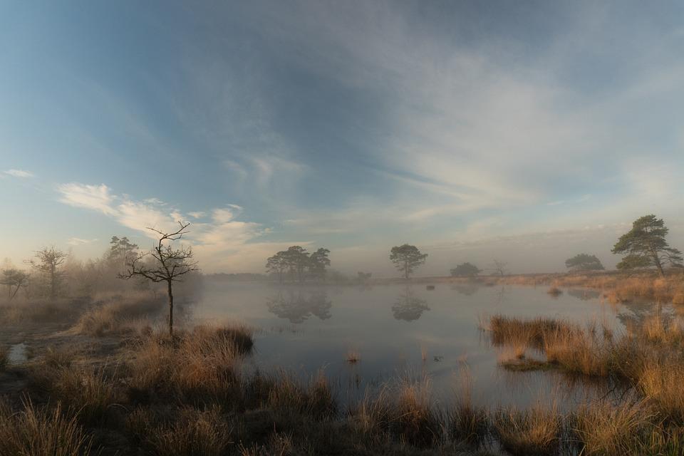 Morning, Sunrise, Dusk, Fog, Foggy, Nature, Trees
