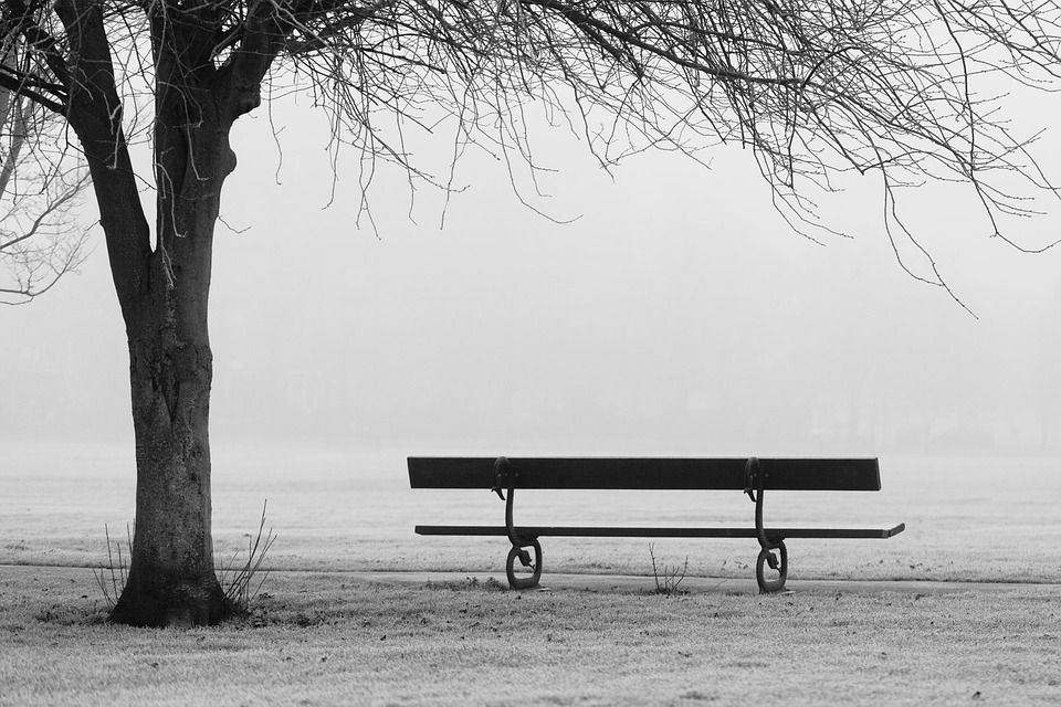 Autumn, Bench, Fall, Fog, Foggy, Landscape, Mist, Misty