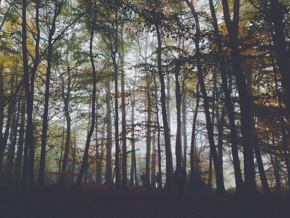 Foggy, Forest, Landscape, Nature, People, Trees, Woods