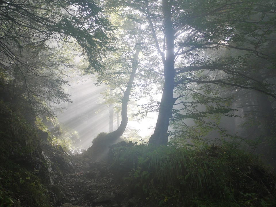 Trees, Sunbeams, Fog, Morning Fog, Foggy, Haze, Mist