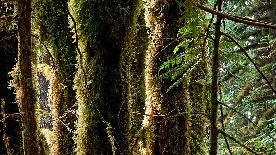 Trees, Shadows, Moss, Fol, Foliage, Outdoor, Green