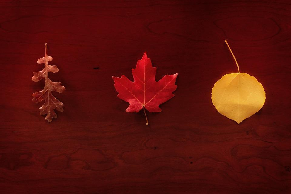 Leaves, Autumn, Maple, Oak, Aspen, Seasonal, Foliage