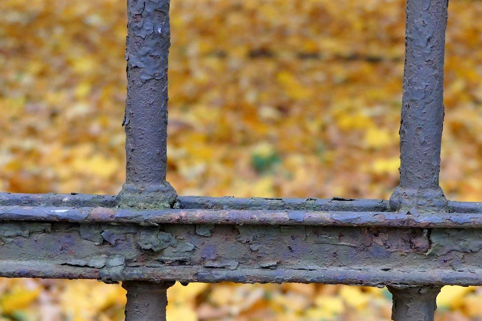 Autumn, Foliage, Closeup, Park