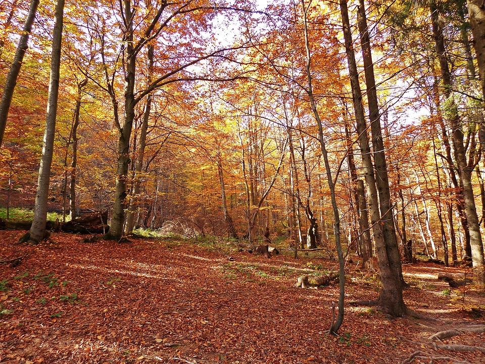 Forest, Autumn, Tree, Landscape, Foliage, Konary