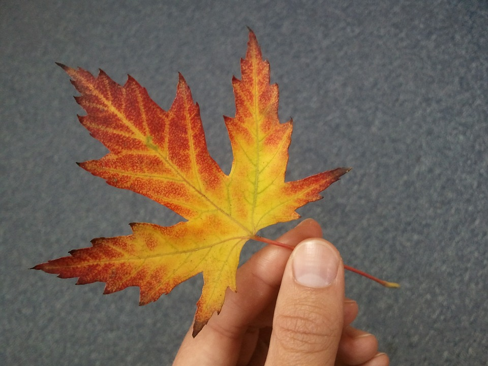 Leaf, The Hand, Autumn, Yellow, Red, Orange, Foliage