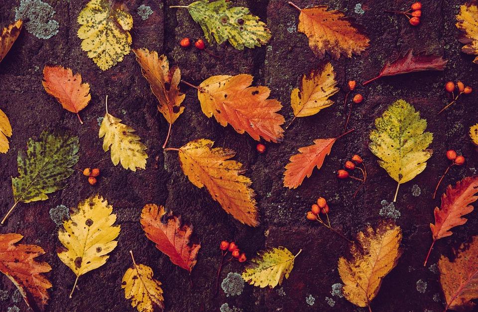 Autumn, Background, Leaves, Foliage, Autumn Leaves