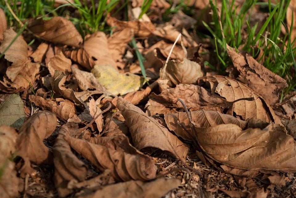 Foliage, Autumn, Dry Leaves, Leaves, Autumn Leaves