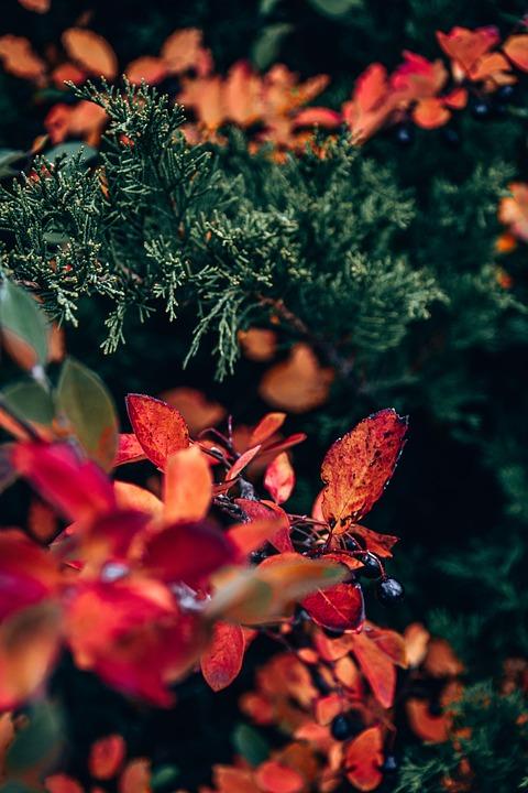 Foliage, Garden, Plants, Autumn, Flora, Nature