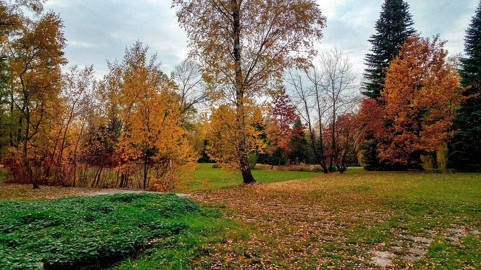 Park, Autumn, Tree, Foliage, October, Nature, Poland