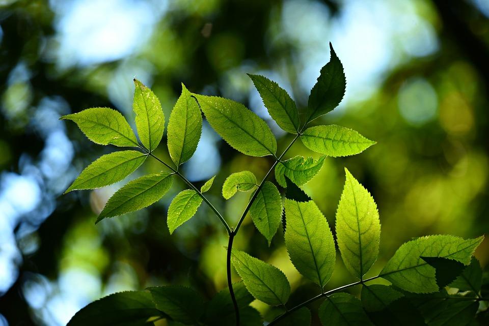 Tree, Leaves, Foliage, Twig, Back Lighting, Bokeh