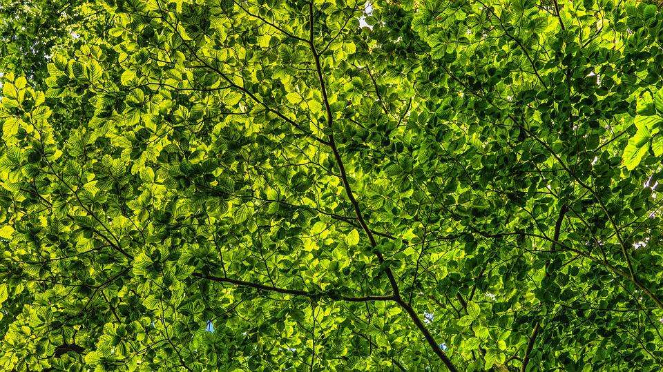 Canopy, Green, Leaves, Branches, Color, Foliage