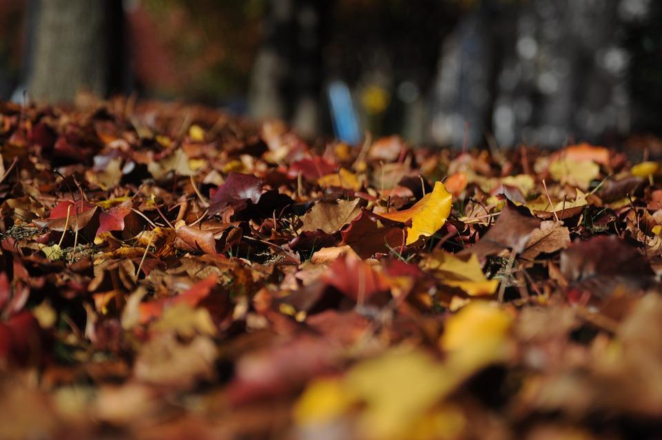 Leaves, Autumn, Fall, Nature, Colors, Colorful, Foliage