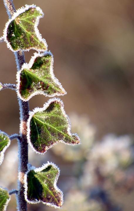 Winter, Leaf, Gel, Nature, Cold, Frost, Foliage, Season