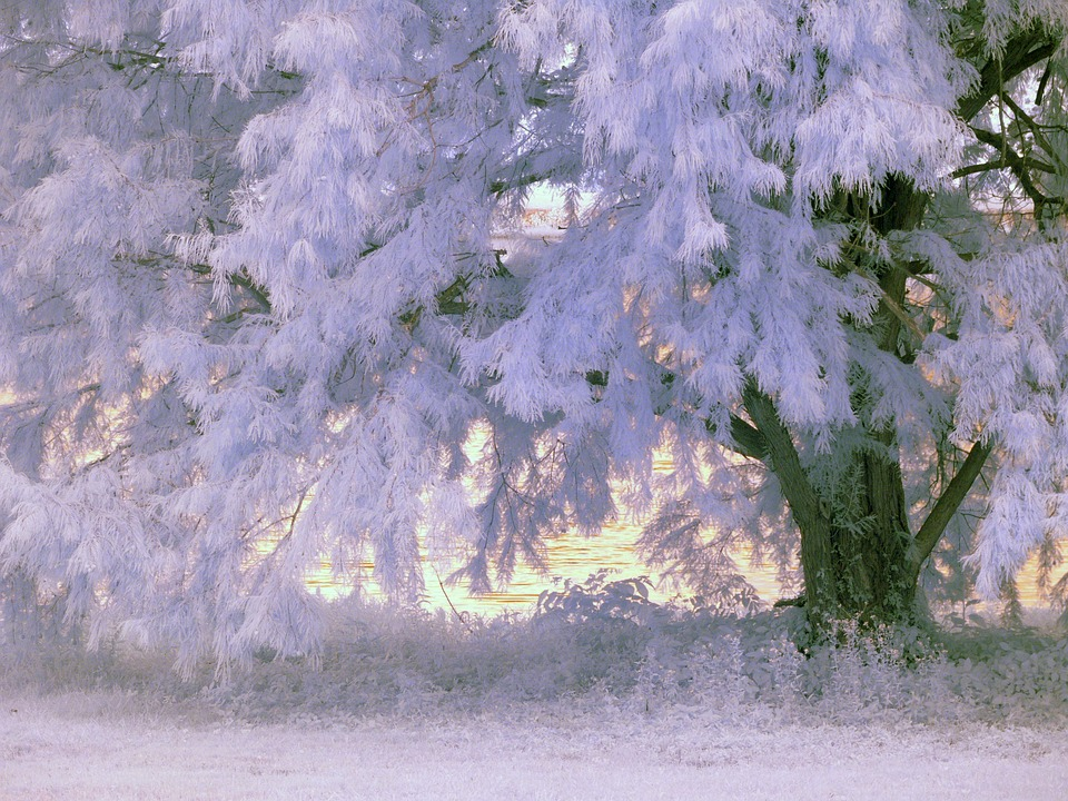 Infrared, Tree, Foliage