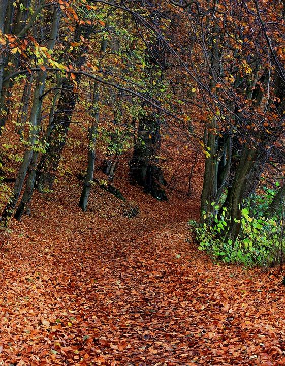 Forest, Autumn, Foliage, Autumn Gold, Nature, Landscape