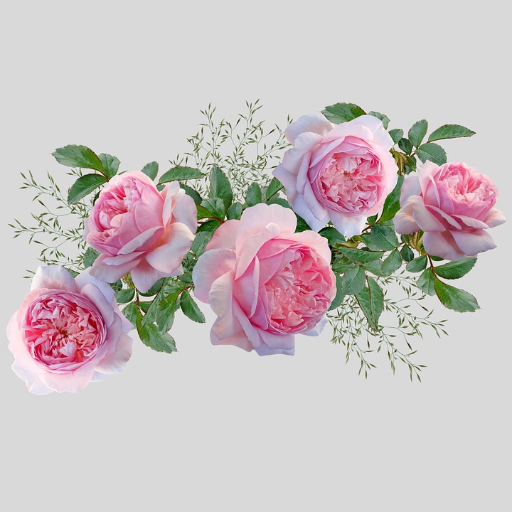 Flowers, Roses, Petals, Leaves, Foliage, Blooming