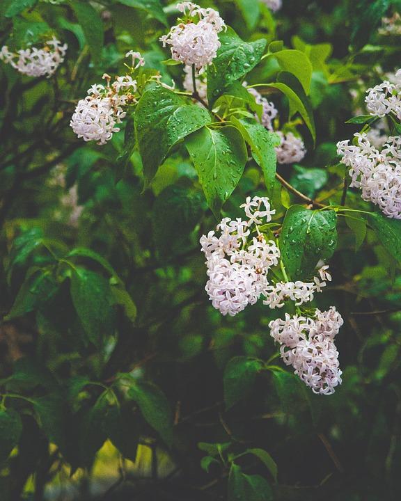 Flowers, Leaves, Foliage, Small Flowers, Bloom, Blossom