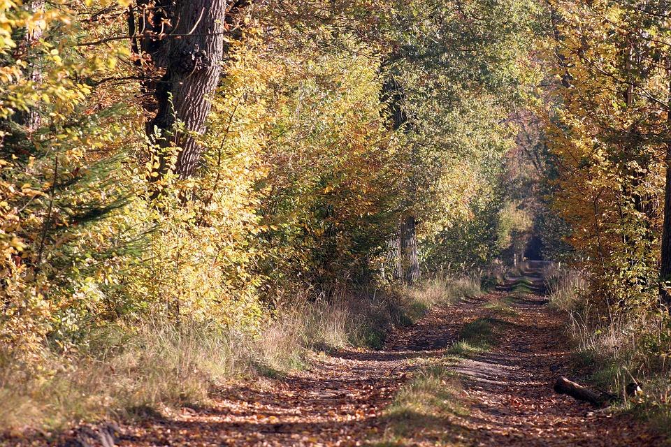Autumn, Forest, Nature, Landscape, Tree, Foliage, Mood