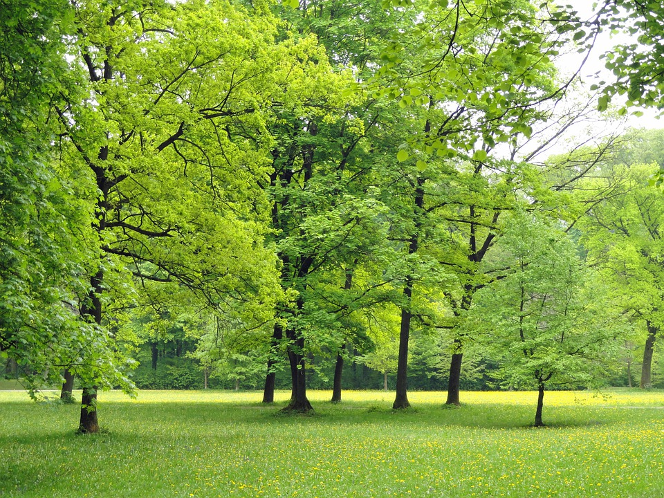 Germany, Nature, Trees, Foliage, Woods, Outside