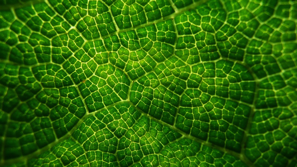Leafy, Patterns, Greens, Leaves, Backgrounds, Foliage