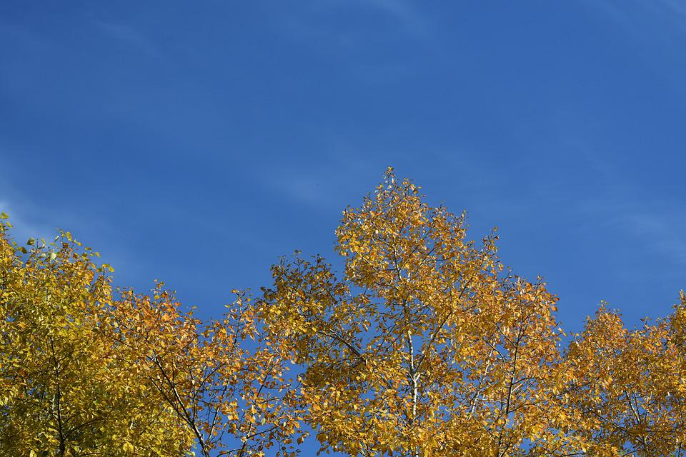 Gold, Autumn, Foliage, Yellow, Sky, Blue