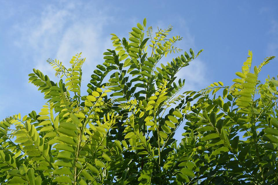 Leaves, Foliage, Nature, Green, Hawthorn, Sky, Blue