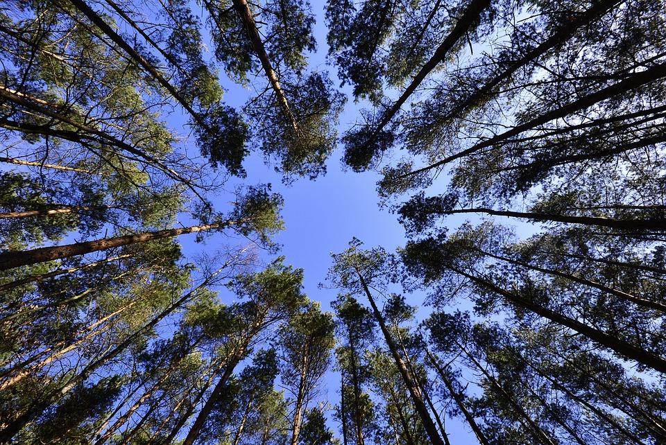 Forest, Sky, Foliage, Green, Landscape, Spring, Nature