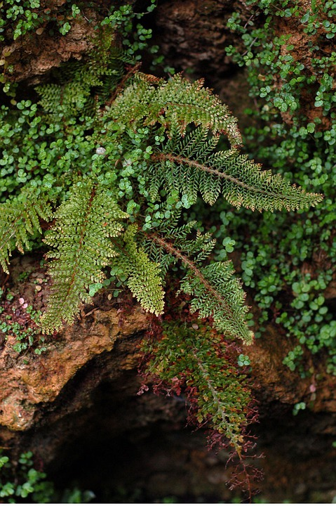 Fern, Plant, Leaves, Green, Spring, Foliage