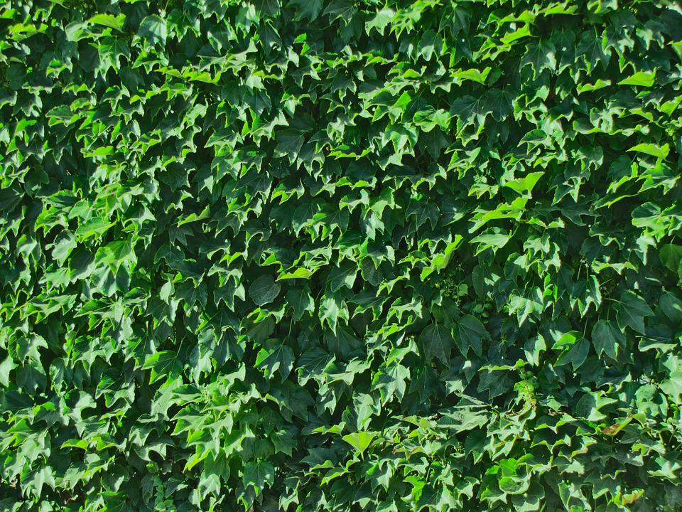 Foliage, Texture, Leaves, Green, Wall, Flora