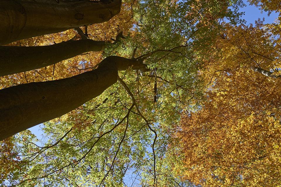 Trees, Nature, The Sky, Autumn, Foliage, Yellow