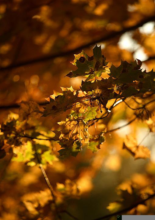 Autumn, Leaves, Foliage, Branch, Nature, Tree