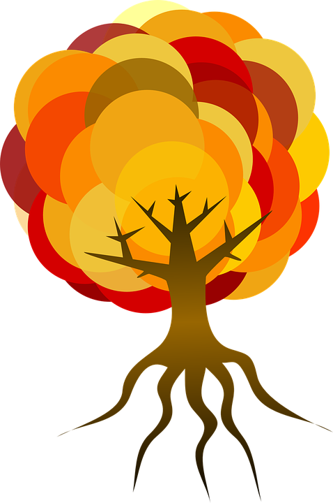 Tree, Fall, Autumn, Foliage, Leaves, Colorful, Orange