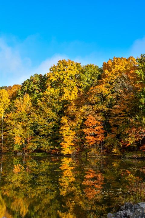 Fall, Trees, Pond, Lake, Autumn, Foliage, Autumn Leaves