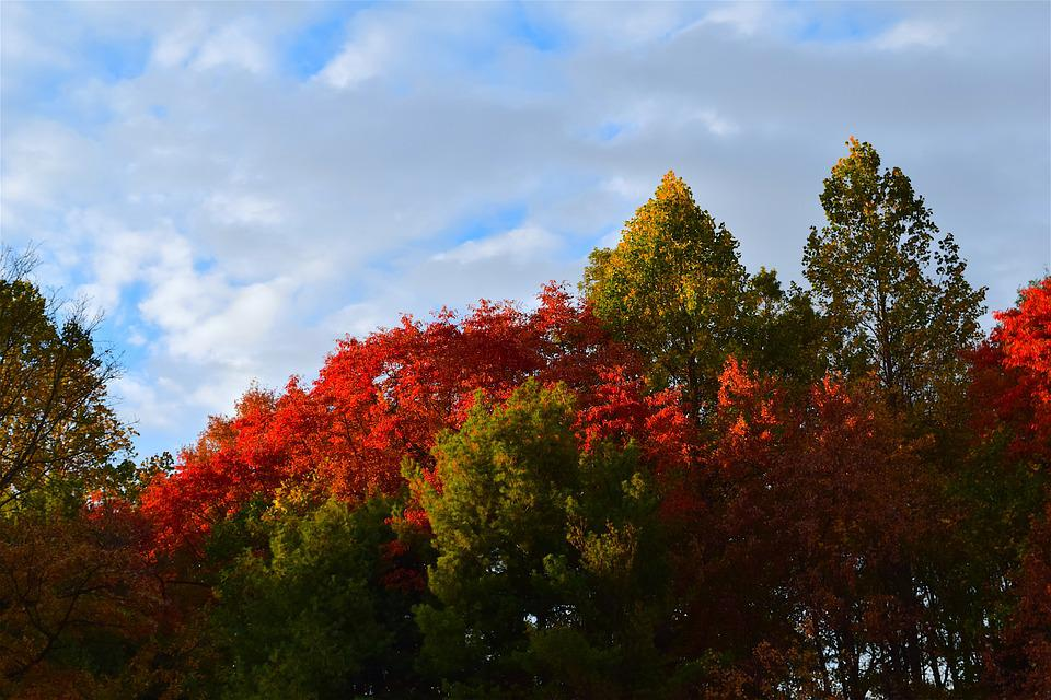 Trees, Foliage, Color, Red, Autumn, Sky, Sunlight