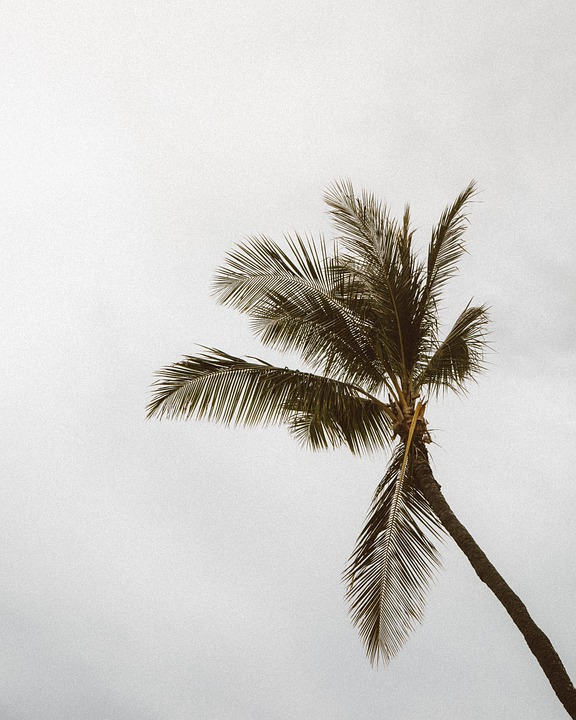 Palm Tree, Leaves, Foliage, Tropical, Flora