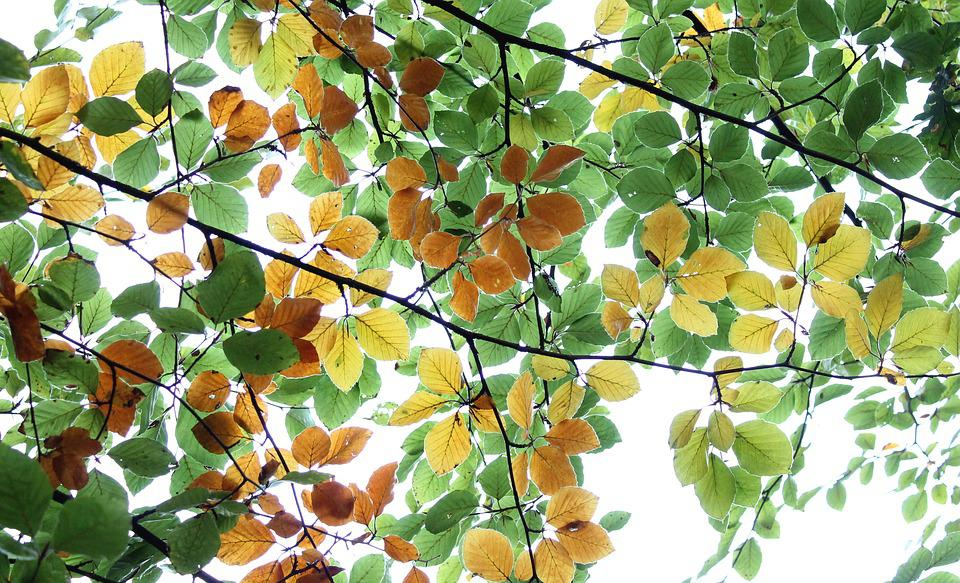 Foliage, Leaves, Tree, Forest, Woods, Twigs, Branches