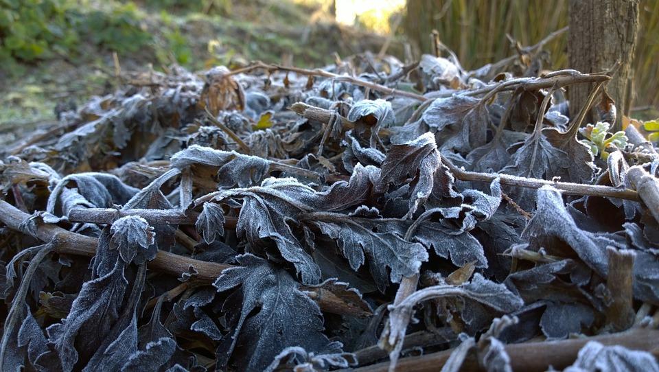 Winter, Foliage, Rime