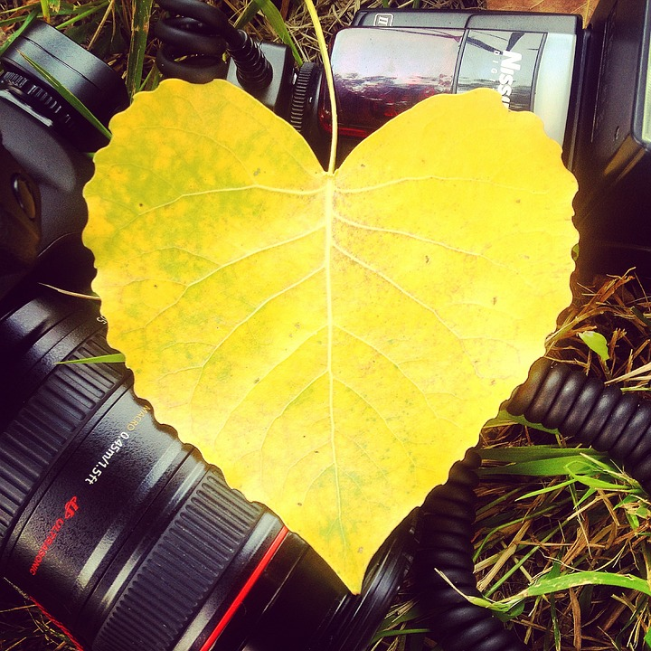 Leaf, Yellow, Canon, Foliage, Heart, Lens, Photography