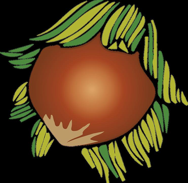 Almond, Plant, Fruit, Nature, Vegetable, Food