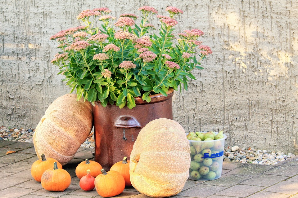 Pumpkins, Deco, Autumn, Decoration, Food, Vegetables