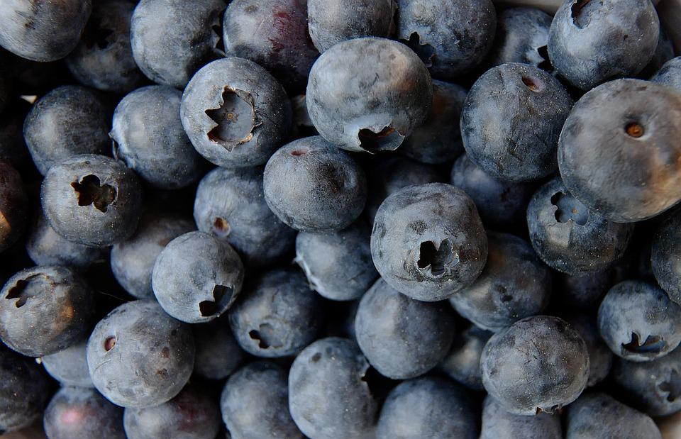 Blueberry, Blueberries, Food, Fruit, Berry, Grow