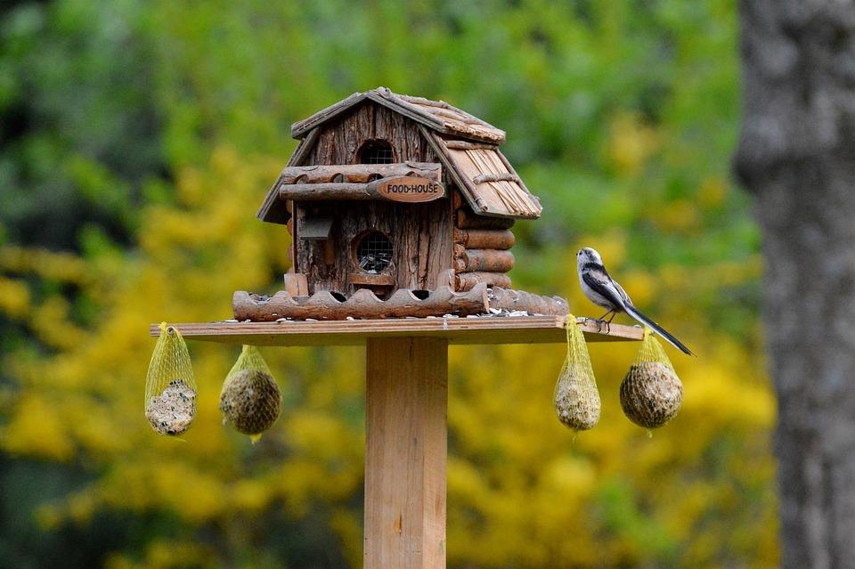 Bird, Aviary, Food, Bird Seed, Fat Balls, Feeding Place