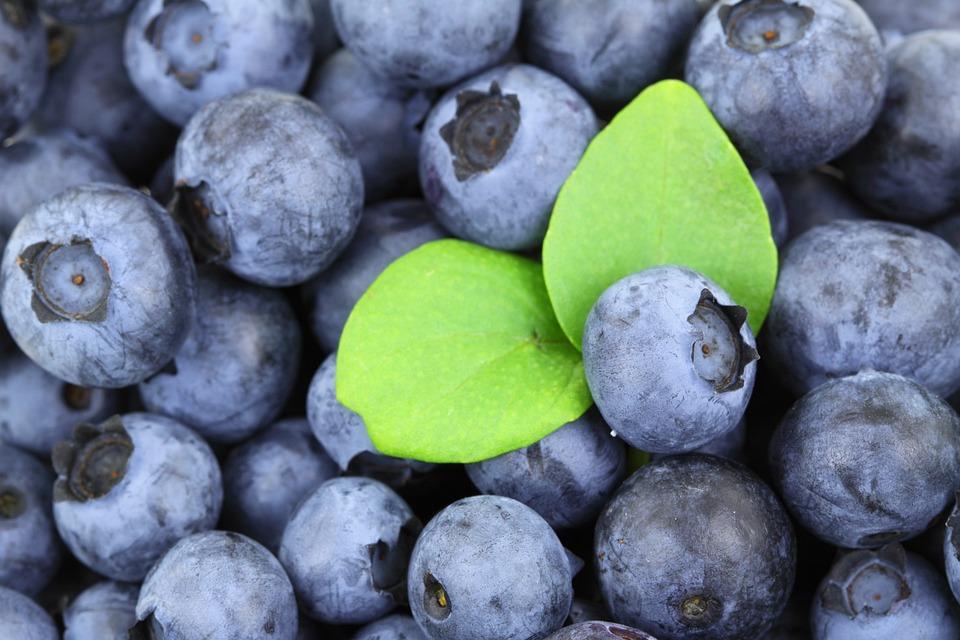 Background, Berry, Blue, Blueberry, Food, Fresh, Fruit