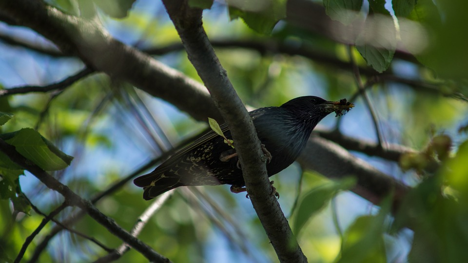 Starling, Branch, Insect, Food