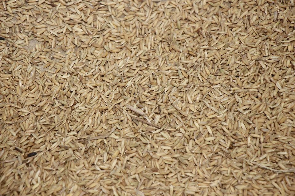 Rice, Dry, Seeds, Food, Brown, Raw, Brown Rice