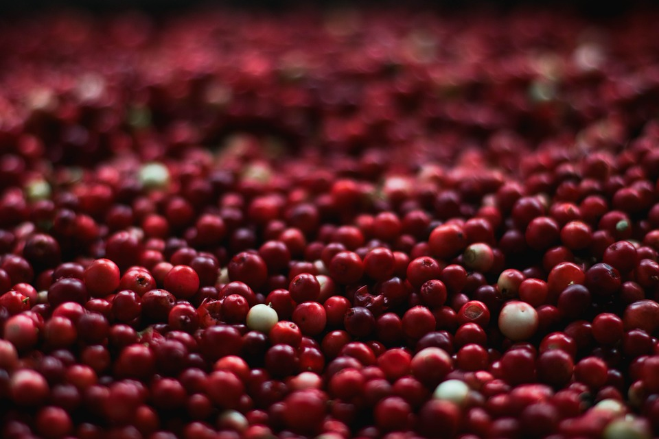 Berries, Close-up, Cranberries, Food, Fruits, Healthy