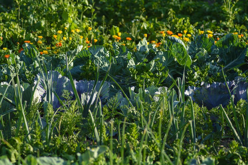 Vegetables, Vegetable Patch, Food, Eat
